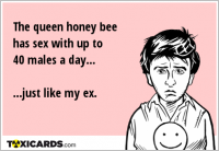 The queen honey bee has sex with up to 40 males a day... ...just like my ex.